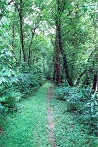 Trail at Sugar Hill in St. Paul, Virginia.